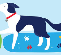 3 Steps to Keep Dogs Clean After Socially Distant Walks this Winter