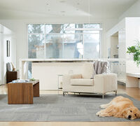 3 Easy Steps Pet Parents Can Take to Keep their Carpet Clean