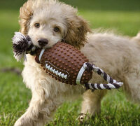 Are you ready for some football? 6 Ways to Make Super Bowl Sunday a Tail-Wagging Good Time