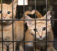 5 Ways to Help Save Homeless Pets this Giving Tuesday