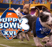 The Ultimate Puppy Bowl PAWty