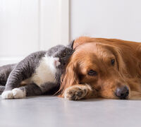 How should I Introduce a New Pet to the other Pets in our Home?