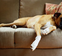 10 Simple Tips for Pet Proofing Your Home