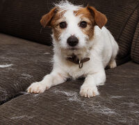 Is there anything I can do to Reduce Pet Dander?