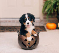 10 Tips for a Safe (and Fashionable) Halloween With Your Pet