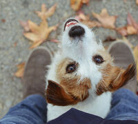 5 Easy Ways to Help Pets This Fall