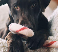 Common Sense, Common Courtesy, and Planning: Secrets to holiday travel with pets