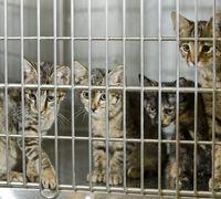 Ready, Set, Adopt a Pet