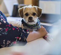 Find the Right Pet Sitter to Reduce Vacation Stress and Mess