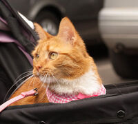 Hot Tips for Safe Summer Auto Travel with Pets