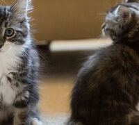 Meow, More Than Ever, It's A Great Time To Adopt A Cat