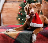 Making Pets Part of the Holidays
