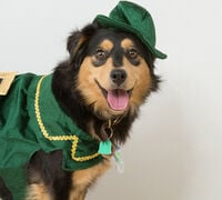 Pet Fashion: Dressing up for all pet personalities