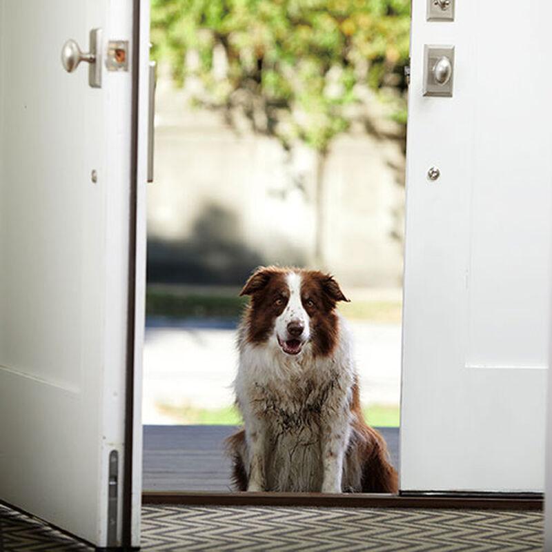 Dog Grooming Dog Bath