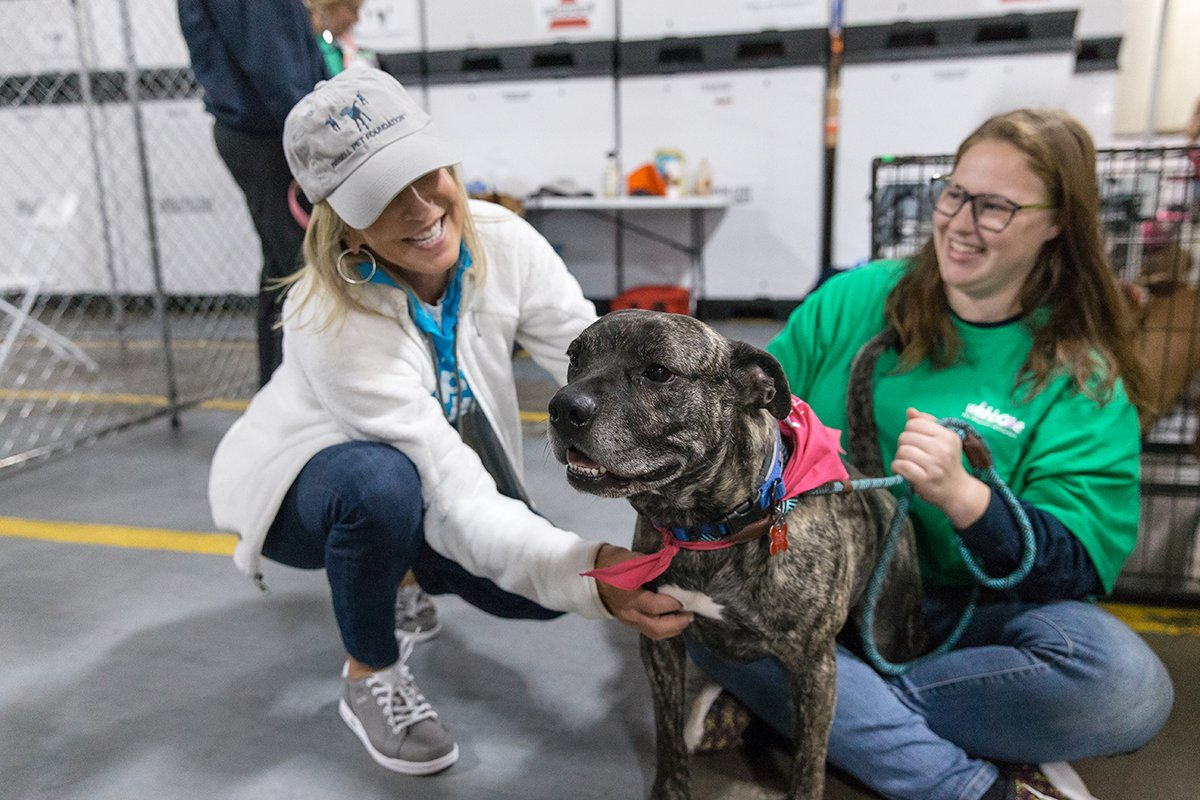 Brindle dog being adopted
